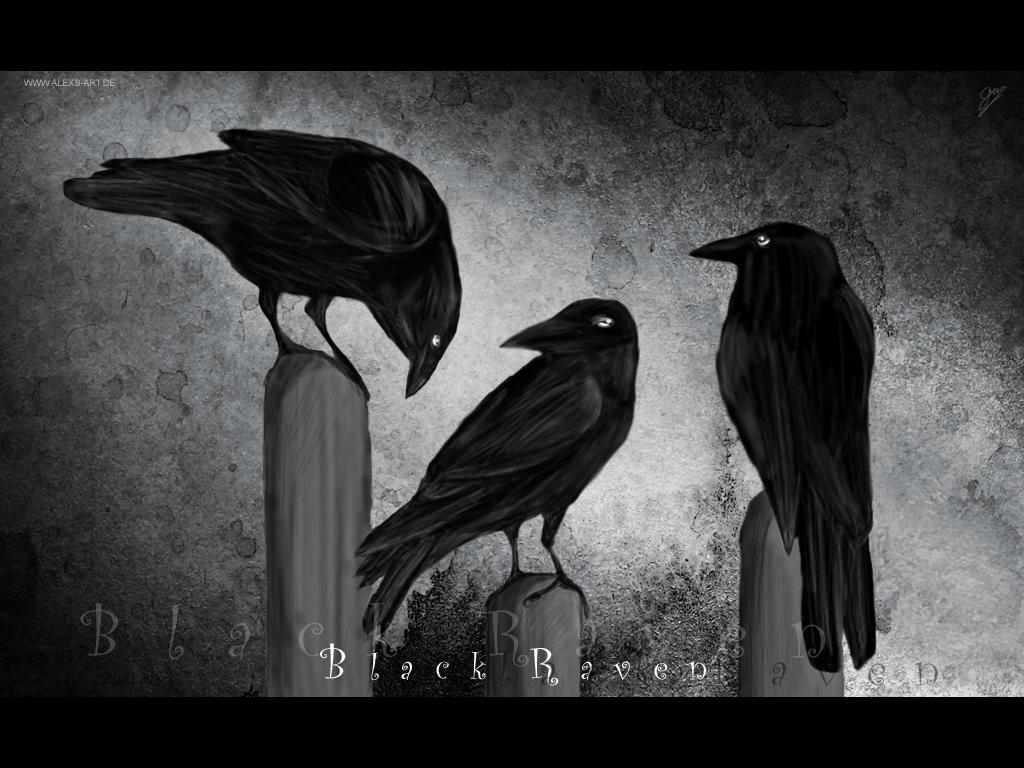 Black-Raven-wallpaper